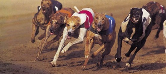 John Kennedy Motors Guys & Dolls Stake Clonmel Greyhound Track